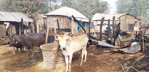 आगलागिमा १५ लाख बढीको क्षति, सात वटा पशुचौपाया जलेर घाइते