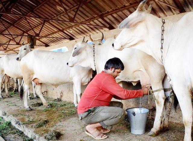 दूधमा पानी मिसाए दश हजार जरिवाना !